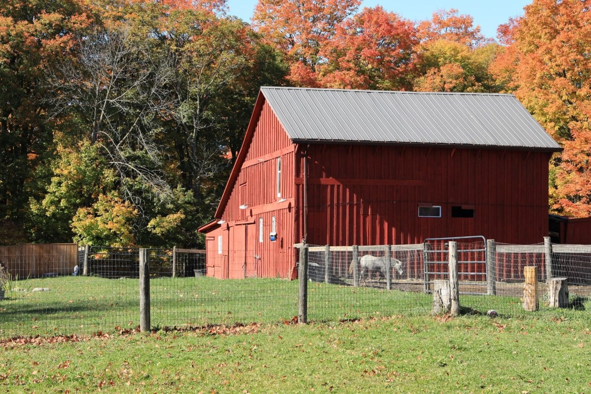 Moving to a Homestead: 4 Steps for Seniors